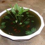 Lotus Pot 30x16 Inches