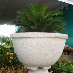 Lotus Pot 44x25 Inches